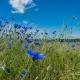 groei en bloei in Montferland